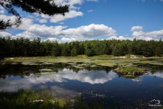 Acadia (6 of 14)