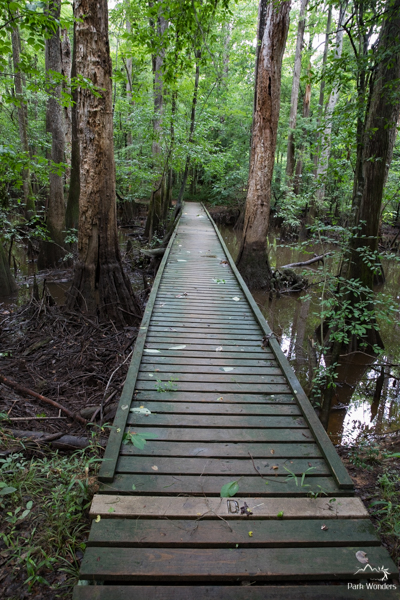 Congaree (10 of 16)