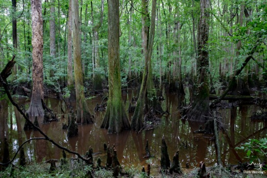 Congaree (11 of 16)
