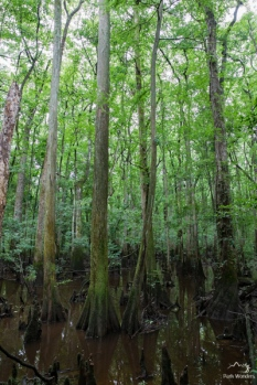 Congaree (12 of 16)