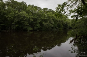 Congaree (14 of 16)