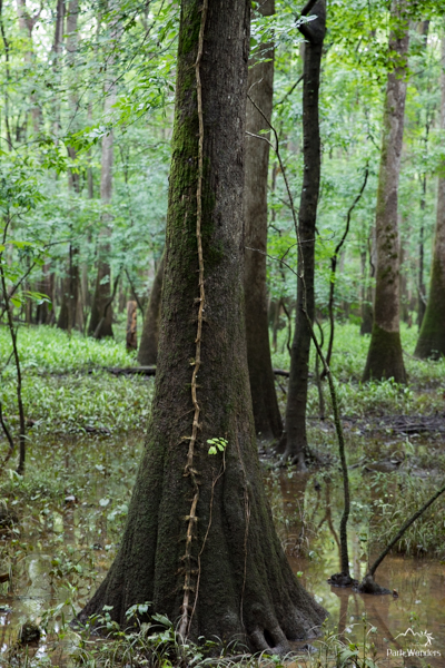 Congaree (2 of 16)