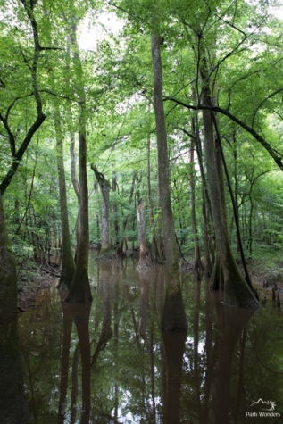Congaree (5 of 16)