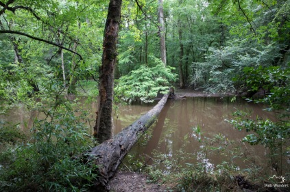 Congaree (7 of 16)