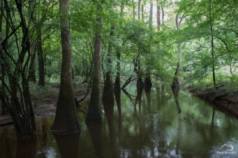Congaree (8 of 16)