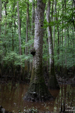 Congaree (9 of 16)