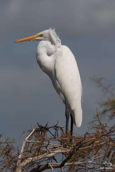 Everglades (11 of 16)