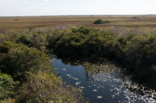 Everglades (14 of 16)