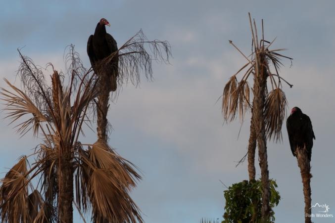 Everglades (3 of 16)