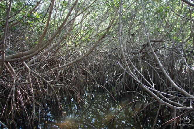 Everglades (7 of 16)