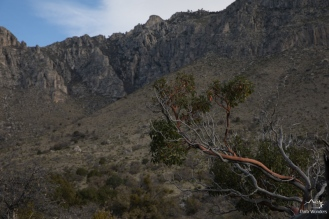 GuadalupeMountains (3 of 11)