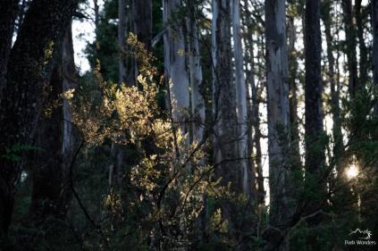 Haleakala National Park Hosmer Grove
