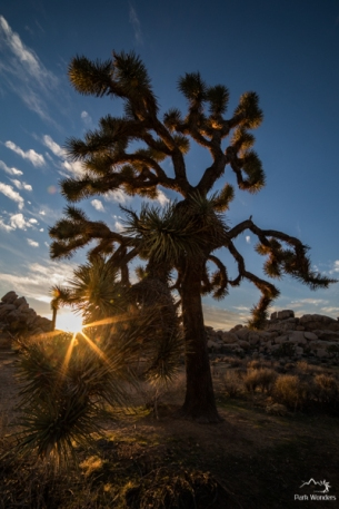JoshuaTree (12 of 18)