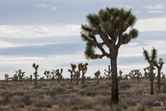 JoshuaTree (17 of 18)
