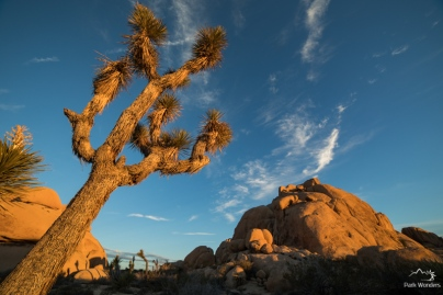 JoshuaTree (4 of 18)