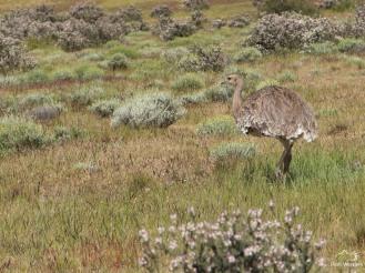 Patagonia--4